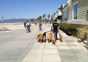sean-oshea-dog-trainer
